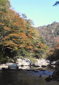 foto de 紅葉: 道明寺 桜 .com